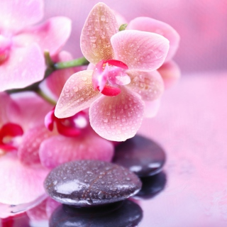 Orchid Spa - Obrázkek zdarma pro iPad mini 2