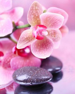 Orchid Spa - Obrázkek zdarma pro Nokia Asha 311