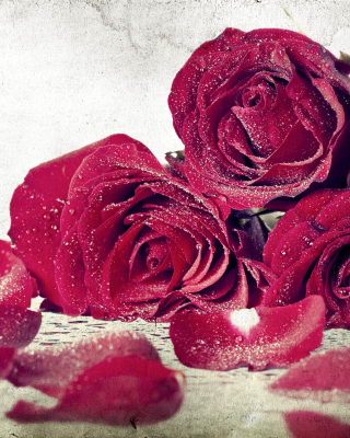 Roses Fresh Dew - Obrázkek zdarma pro Nokia Lumia 625