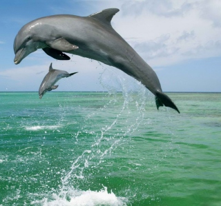 Jumping Dolphins - Obrázkek zdarma pro iPad 3
