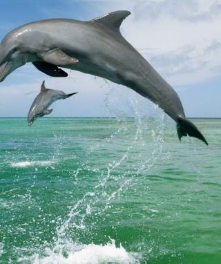 Jumping Dolphins - Obrázkek zdarma pro 640x960