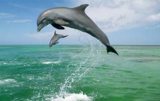 Jumping Dolphins - Obrázkek zdarma pro 2880x1920