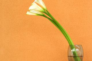 Calla Lily - Obrázkek zdarma pro Samsung Galaxy S3