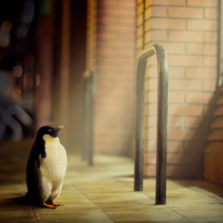 Penguin - Obrázkek zdarma pro iPad