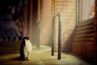 Penguin - Obrázkek zdarma pro Samsung Galaxy Q