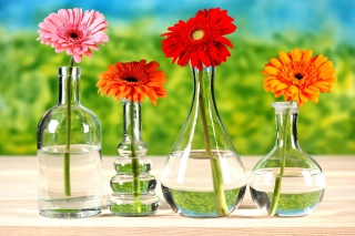 Free Chrysanthemum In Vase Picture for Android, iPhone and iPad