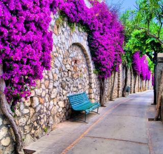 Bench And Purple Flowers - Obrázkek zdarma pro 128x128