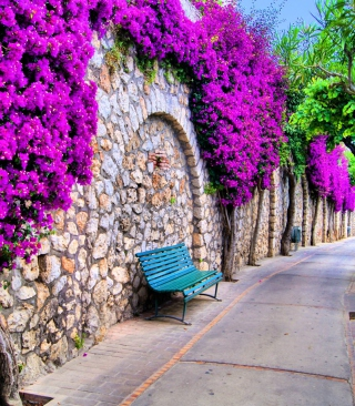 Bench And Purple Flowers - Obrázkek zdarma pro 352x416