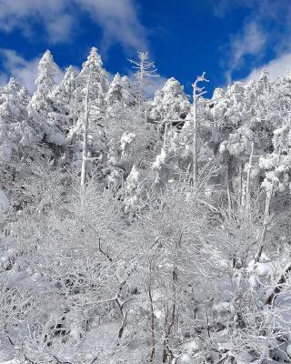 Snowy Winter Forest - Obrázkek zdarma pro Nokia Asha 501