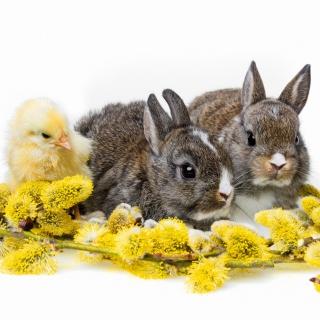 Rabbits and Chicken - Obrázkek zdarma pro 1024x1024