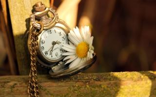 Vintage Watch And Daisy - Obrázkek zdarma pro 480x360