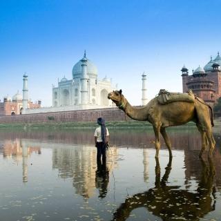 Camel Near Taj Mahal - Obrázkek zdarma pro iPad 2