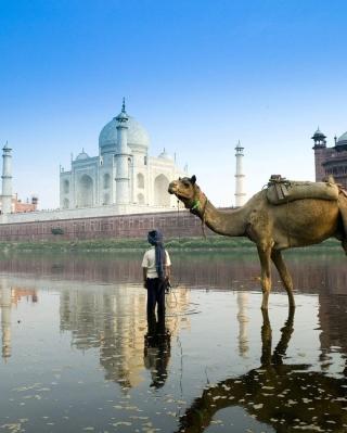 Camel Near Taj Mahal - Obrázkek zdarma pro 176x220