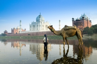 Camel Near Taj Mahal - Obrázkek zdarma pro Nokia X2-01