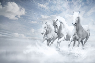 Sky Horses Background for Android, iPhone and iPad