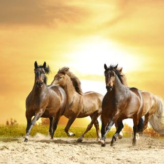 Horse Gait Gallop - Obrázkek zdarma pro iPad mini