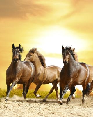 Horse Gait Gallop - Obrázkek zdarma pro 240x400
