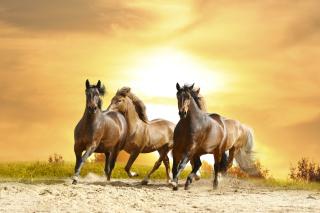 Horse Gait Gallop - Obrázkek zdarma pro 1280x1024