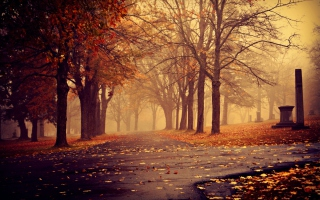 Park In Autumn Picture for Android, iPhone and iPad