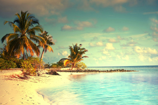 Tropical Ocean Vacation Wallpaper for Android, iPhone and iPad