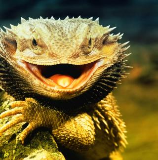 Lizard Dragon - Obrázkek zdarma pro iPad mini 2