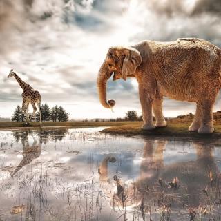 Fantasy Elephant and Giraffe - Obrázkek zdarma pro 208x208