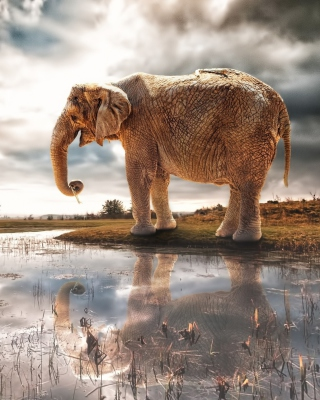 Fantasy Elephant and Giraffe - Obrázkek zdarma pro 750x1334