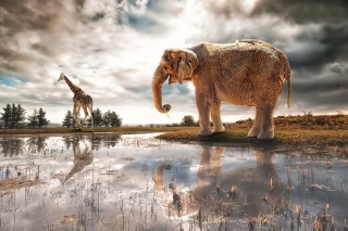 Fantasy Elephant and Giraffe - Obrázkek zdarma pro Widescreen Desktop PC 1920x1080 Full HD