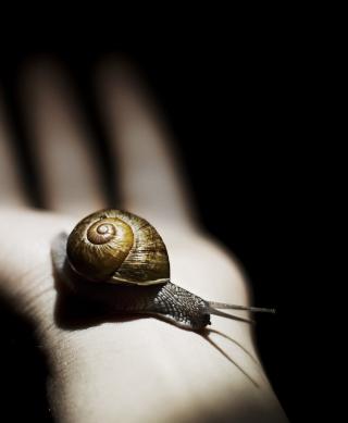 Snail On Hand - Obrázkek zdarma pro Nokia Asha 203