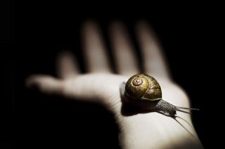 Snail On Hand - Obrázkek zdarma pro 320x240