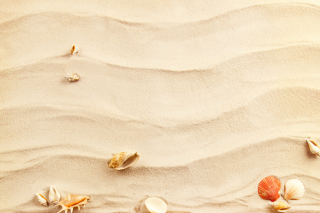 Sand and Shells - Obrázkek zdarma pro 1152x864
