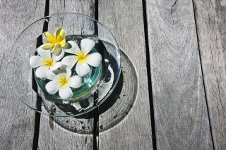 Plumeria Flowers Wallpaper for Android, iPhone and iPad