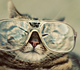 Serious Cat In Glasses - Obrázkek zdarma pro iPad
