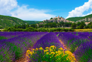 Free Lavender Field In Provence France Picture for Android, iPhone and iPad