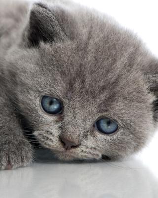 Melancholic blue eyed cat - Obrázkek zdarma pro Nokia C7