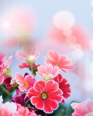Bokeh Bright Flowers - Obrázkek zdarma pro Nokia Asha 306