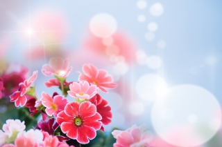 Bokeh Bright Flowers Background for Android, iPhone and iPad