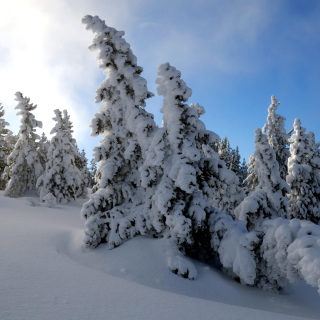 Canada Winter - Obrázkek zdarma pro iPad 2
