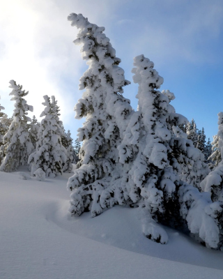Canada Winter - Obrázkek zdarma pro iPhone 5
