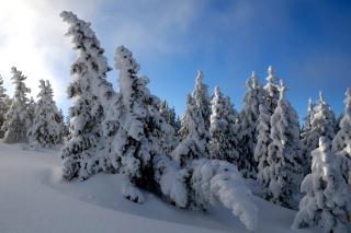 Canada Winter - Obrázkek zdarma pro Sony Tablet S