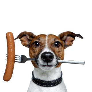 Dog with sausage - Obrázkek zdarma pro 320x320