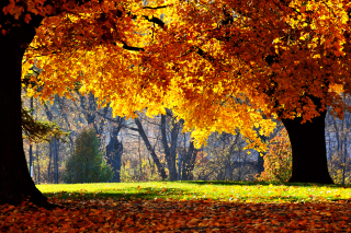 Free Golden Autumn Picture for Android, iPhone and iPad