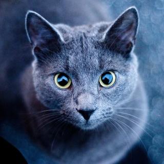 Cats Look - Obrázkek zdarma pro 128x128