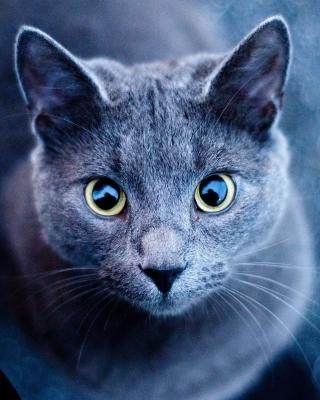 Cats Look - Obrázkek zdarma pro iPhone 5S