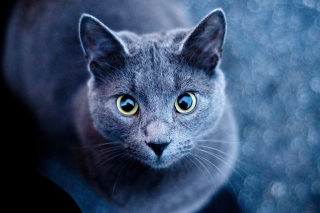 Cats Look Picture for Android, iPhone and iPad