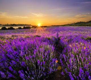 Provence Sunrise - Obrázkek zdarma pro 320x320