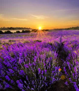 Provence Sunrise - Obrázkek zdarma pro iPhone 4S