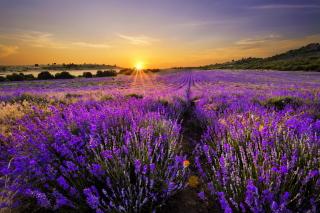 Provence Sunrise - Obrázkek zdarma pro 960x854