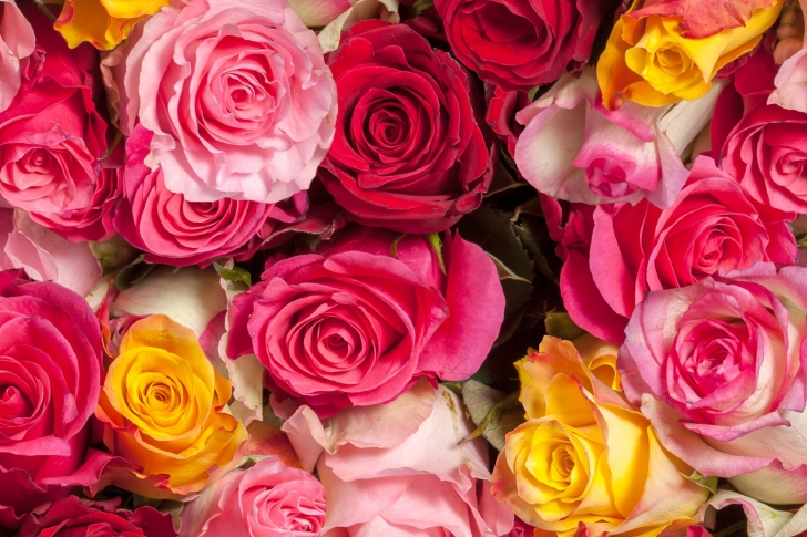 Colorful Roses 5k wallpaper