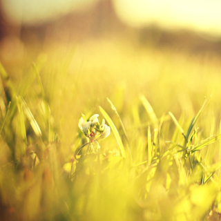 Macro Grass on Meadow - Obrázkek zdarma pro 208x208